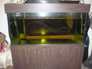 5x2x2 aquarium for sale used 5x2x2 5 39 fish tank with for Fish tank sump pump