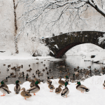 Wintery Wonderland of Central Park