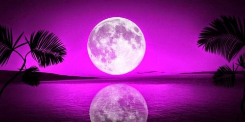 tropical-moon-bay-firefox-persona-lake-moon-ocean-palms-reflection-sea-sky-trees-water