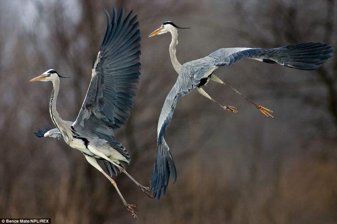 Globetrotting photographer captures perfect wildlife action shots