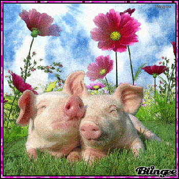 Losing a Friend & Piggy Love
