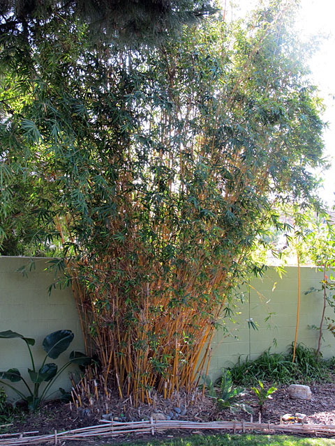 bamboo-gardening.jpg