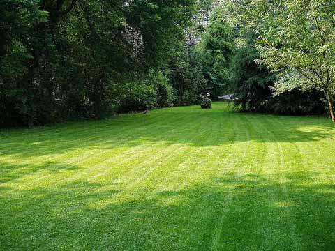 lawns-pros-pga.jpg