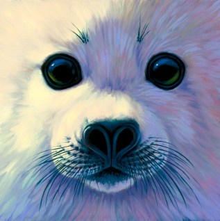 Harp Seal Pup Face