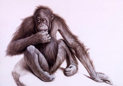 Nervous Orangutan