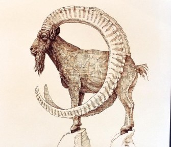 The Really Endangered Species List, Big Horn Sheep