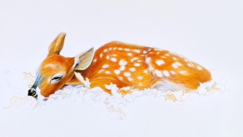 Sleeping Deer