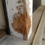 It's a Dog Eat Wall World Out There – How to Repair a Dog Chewed Wall