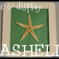 3 Ways to Frame & Display Sea Shells!