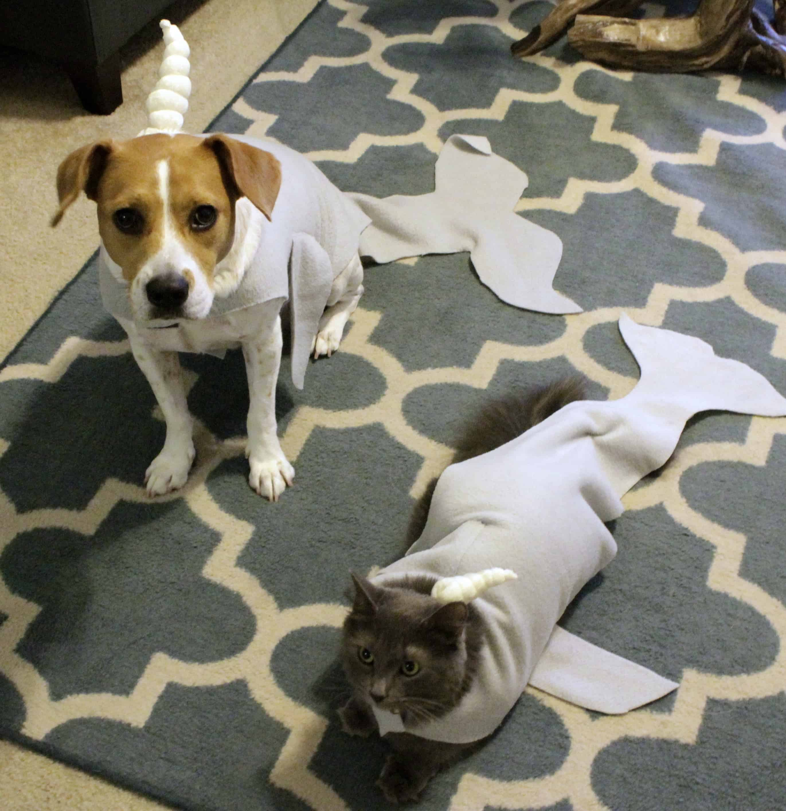 diy narwhal cat and dog halloween costume tutorial