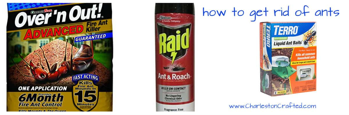 how to get rid of ants on window sill