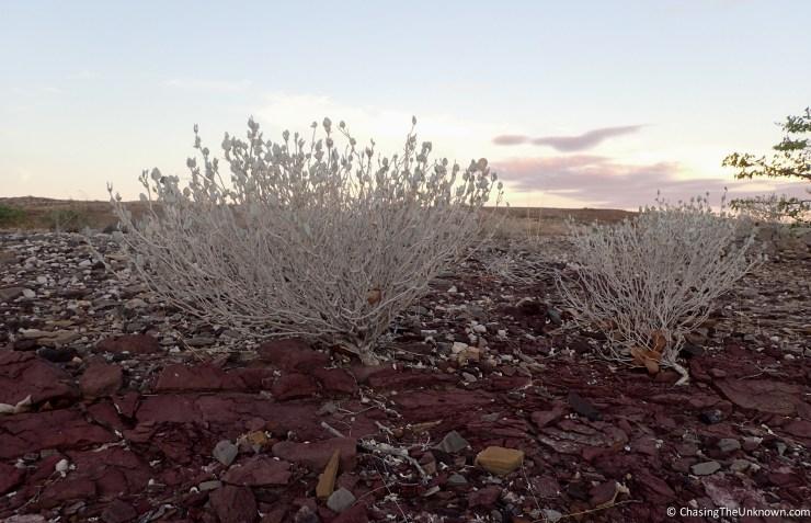 plants near Burnt Mountain