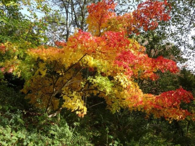 Autumn colours (Medium)