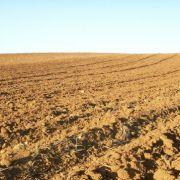farm-sxc-1192062