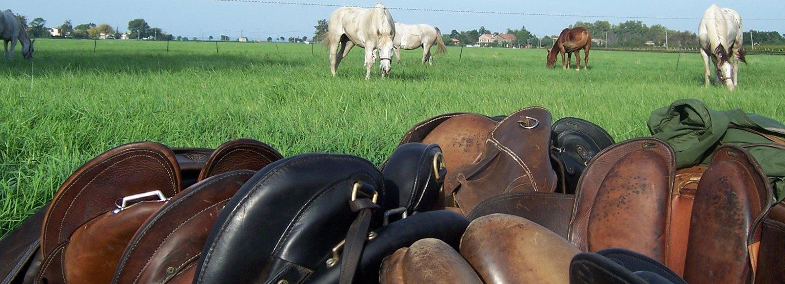 randonnée cheval canada maroc islande argentine