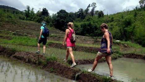 Trekking in the rice fields