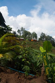 Organic farm at Spicy Villa