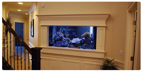 Aquarium Maintenance | Aquarium Service | Coral Maintenance | Reverse