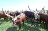 Farmers-herdsmen rifts: CISLAC calls for appropriate investigation