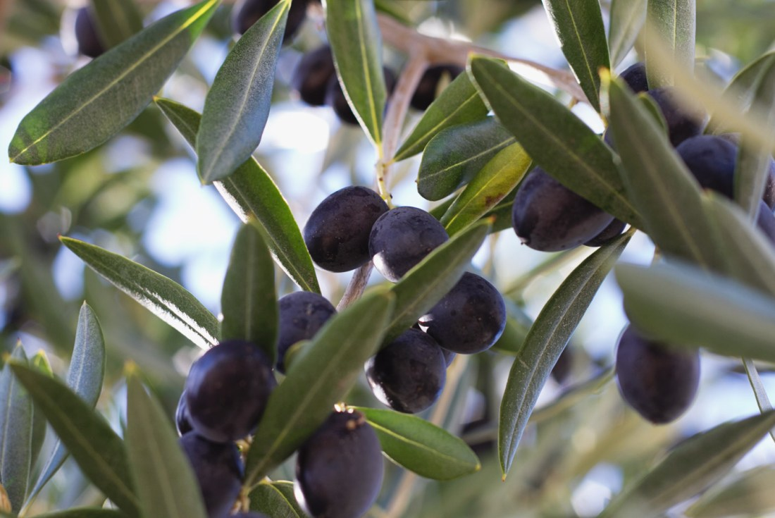 olives-part-one-3