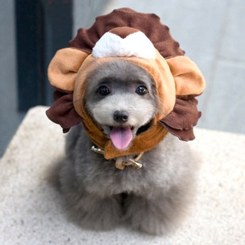 Medium Crop Of Dog Lion Costume