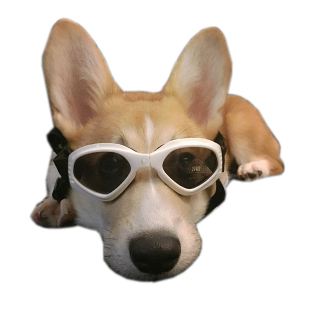 Fullsize Of Dogs With Glasses