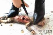 new-high-heel-kitten-killer-17
