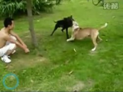 Two dogs fight in China while their owners watch.