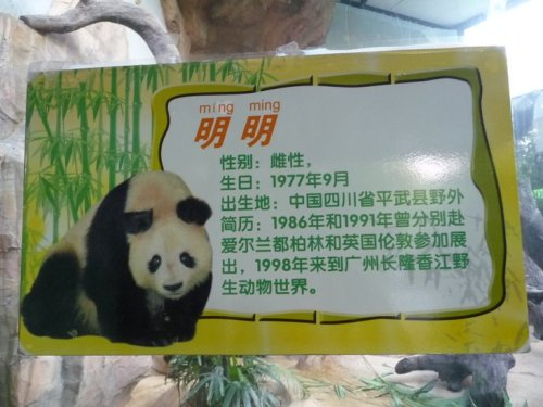 A sign about Ming Ming, a giant panda in Guangzhou.