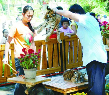 A report of a Guangzhou zoo abusing baby tigers.
