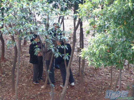 chinese-elderly-in-woods-doing-naughty-things-nanchang-04