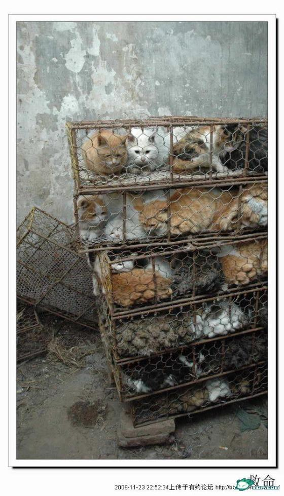 cats-cages-tianjin-china-04