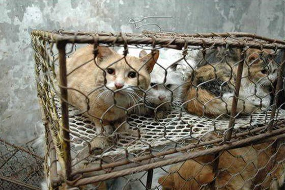 cats-cages-tianjin-china