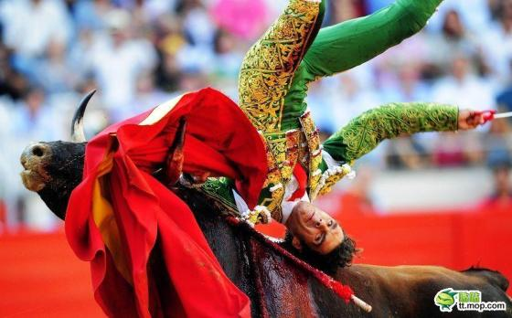 A Spanish matador is flipped over a bull.