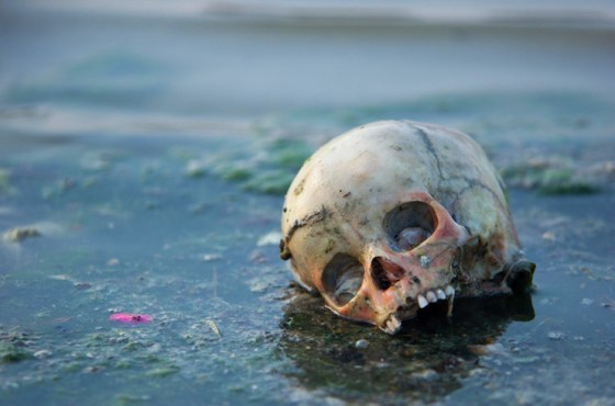 A skull in the Ganges River.