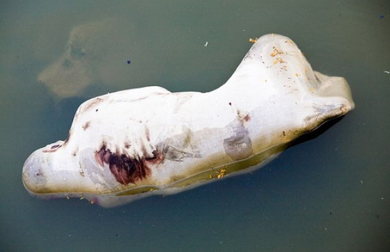 A bloated human corpse in the water.