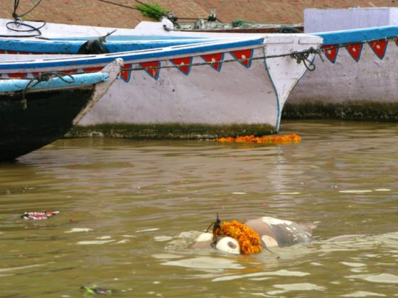 A body floating in the Ganges River.