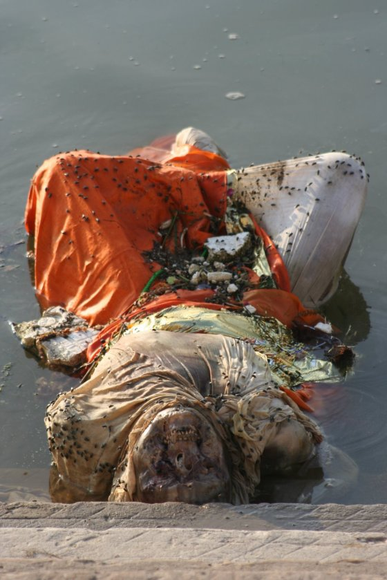 A rotting corpse in the Indian river Ganges, covered with flies.