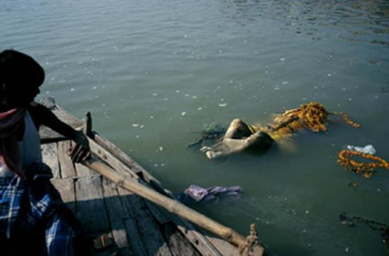 Another floating corpse in the river Ganges.