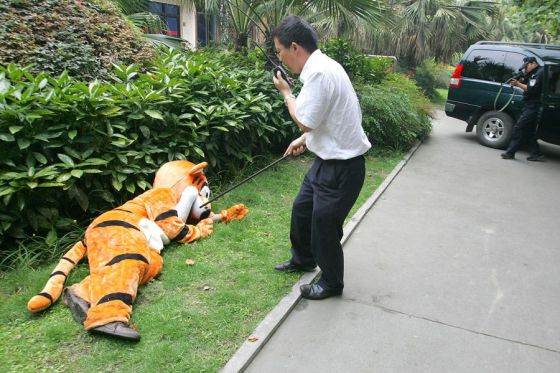 "A zoo worker checking if the escaped ""tiger"" has been tranquilized."