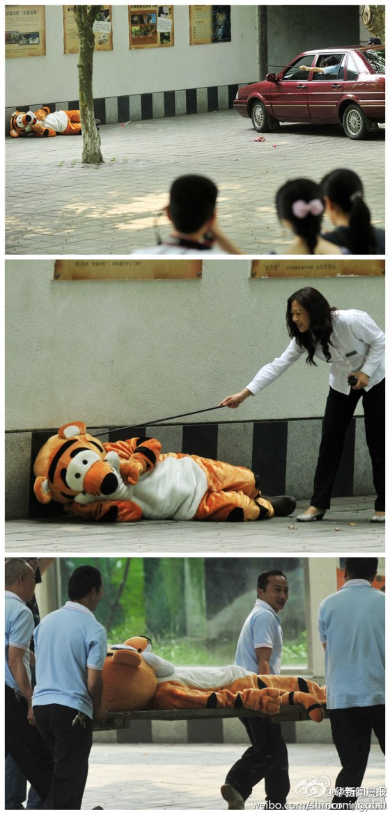 Photos of a training drill at the Chengdu Zoo in Sichuan province of China where zoo personnel and the Forestry police rehearse their response to a potential tiger escape.
