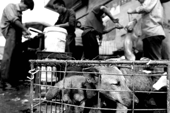 Dogs in cages with dead defurred dogs in the background, being prepared for their meat.