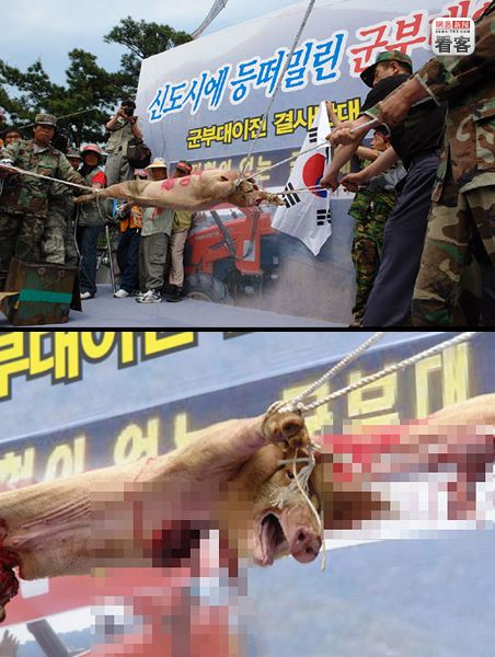 Anti-American Korean protesters rip apart a 2-month old pig.