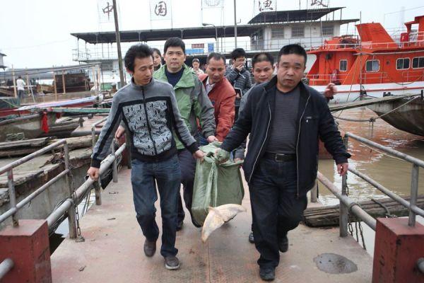 Endangered Yangtze river dolphins found dead in Hunan.