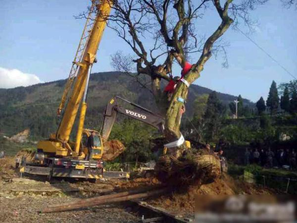 sichuan-gulin-villagers-clash-with-police-over-old-tree-03