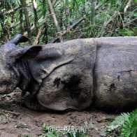 rhinoceros-horn-slaughter-trade-04
