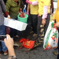 china-changsha-crabs-alligator-spilled-in-traffic-accident-looted-by-chinese-passerbys-14