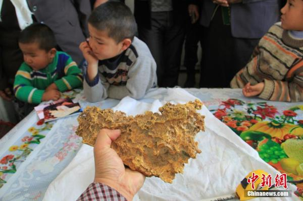 8kg-large-gold-nugget-found-by-herdsman-in-china-xinjiang-02