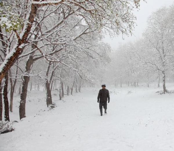 Unusual Weather Strikes Northern China, Snow Covered Flowers