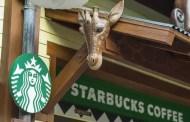 Disney's Animal Kingdom's Starbucks Opens at Creature Comforts